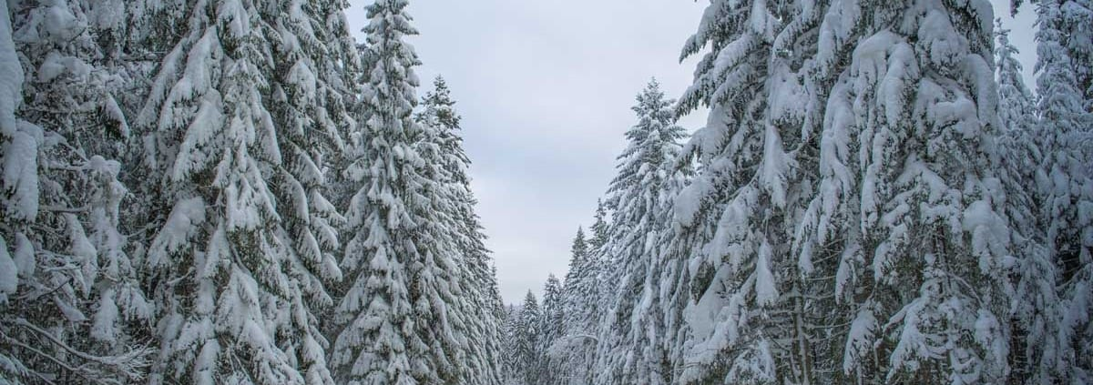 Winter Road Authority Cases
